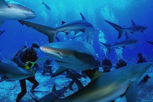 В египетском Шарм-эль-Шейхе поймали акулу, напавшую на