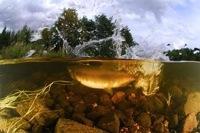 """Экспозиция """"Подводное царство"""" от Светланы Носовой открыта до конца года в московской """"Галерее N"""""""