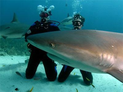 Праздник акулами не испортишь: новогодние тенденции выездного туризма.